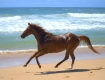 tommy-beach-sprint