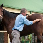 Remedial Massage for Horses