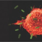 Transfer Factor: Long-Awaited Next Step in Immunotherapy