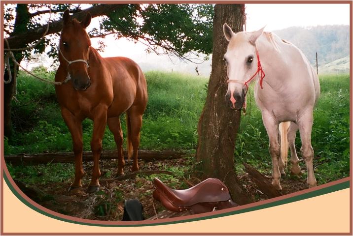 Tying horses up