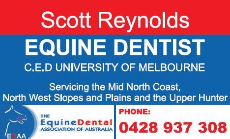 Equine Dentist Scott Reynolds