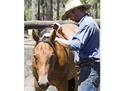 Mark Langley Horsemanship