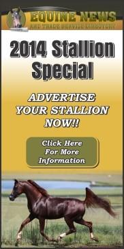 Stallion Special