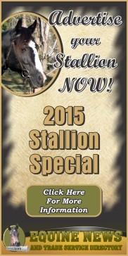 STALLION WEB AD 2015